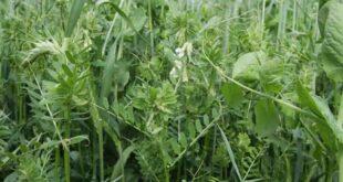 takarmánynövények